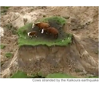 earthquakecows-1